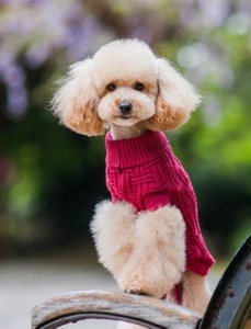 Pet Dog Teddy Comfortable Clothes Soft Thickening Warm Polar Fleece Winter Clothes